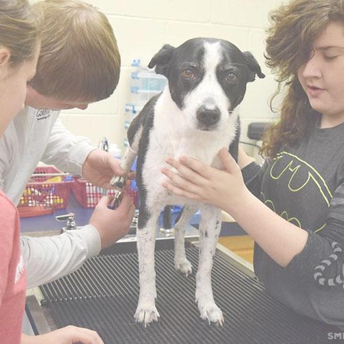 Cours pour apprendre a couper les griffes d'un chien
