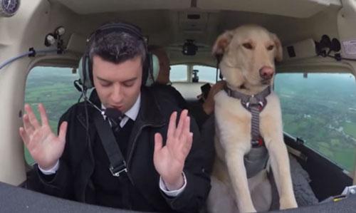 Un chien peut-il piloter un avion ?