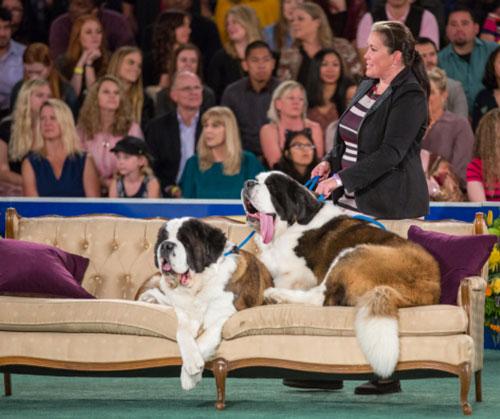 Concours chien en couple