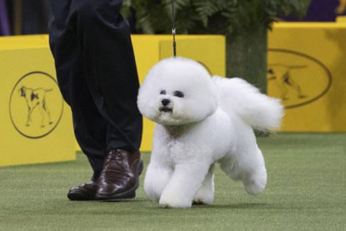 Concours chiens 9 à 18 mois