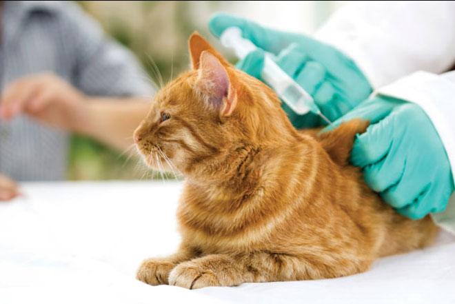 Coût vétérinaire