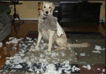 Punition du chien après sa bêtise