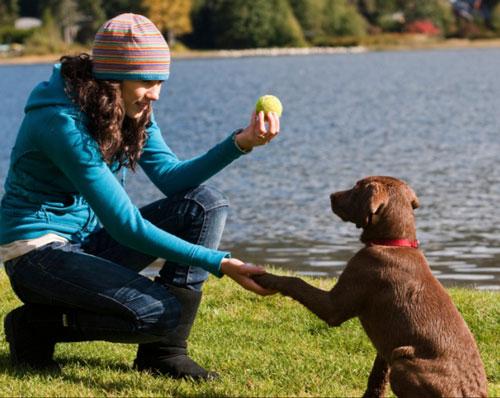 Contact entre le maître et son chien