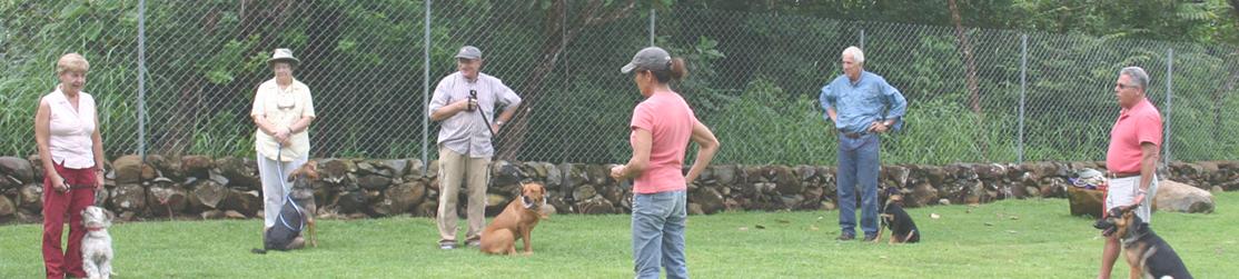 Séance de dressage de chiens avec des jeux