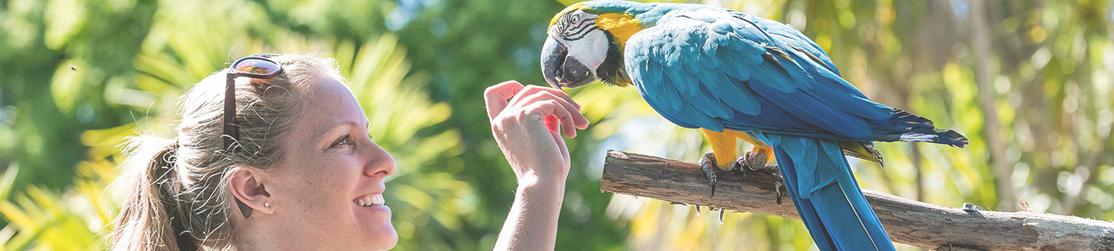 Soigneuse qui donne à manger à un perroquet dans un Zoo
