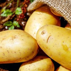 Se soulager avec une pomme de terre après l'épilation