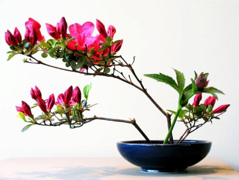 Apprendre l'art floral japonais comme l'Ikebana