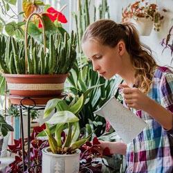 Bien arroser ses plantes
