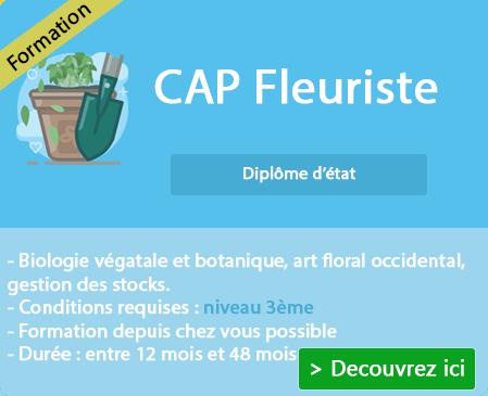 Quel est le programme du CAP Fleuriste ?
