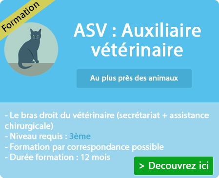 Se former à la profession d'ASV sur Belley