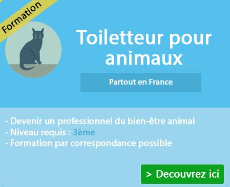 Apprendre le métier de toiletteur sur Rodez